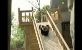 Eclectic Section: Sometimes We All Just Need A Panda Break